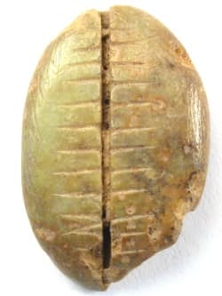 Zhou Dynasty               bone cowrie money